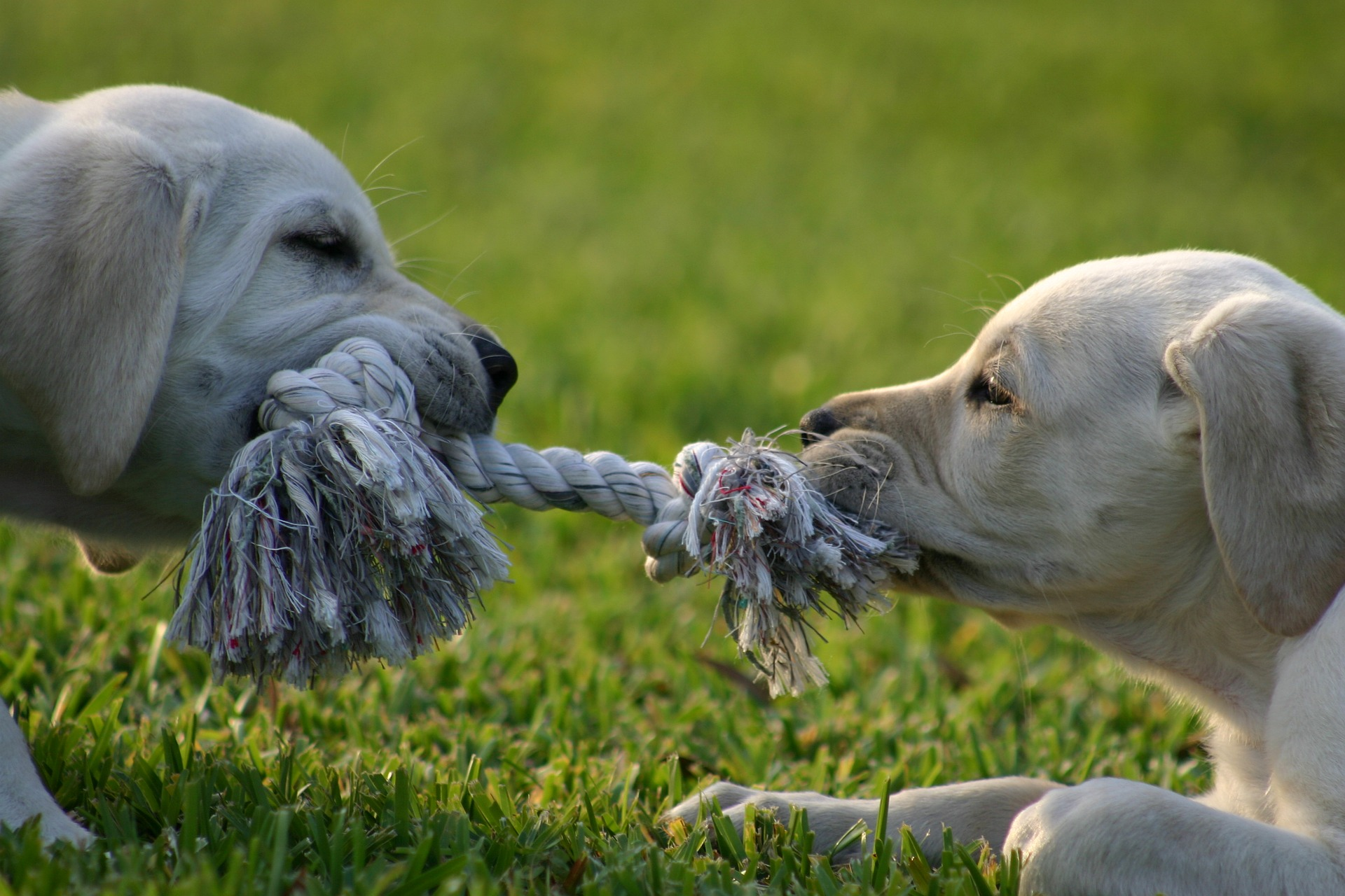 Tug of war shows differences between mediation and litigation